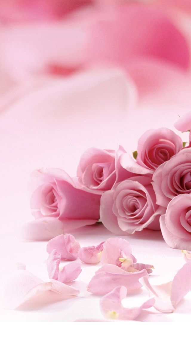 41 Cute Valentine Iphone Wallpapers Free To Download Pink Flowers Wallpaper Pink Rose Flower Lovely Flowers Wallpaper