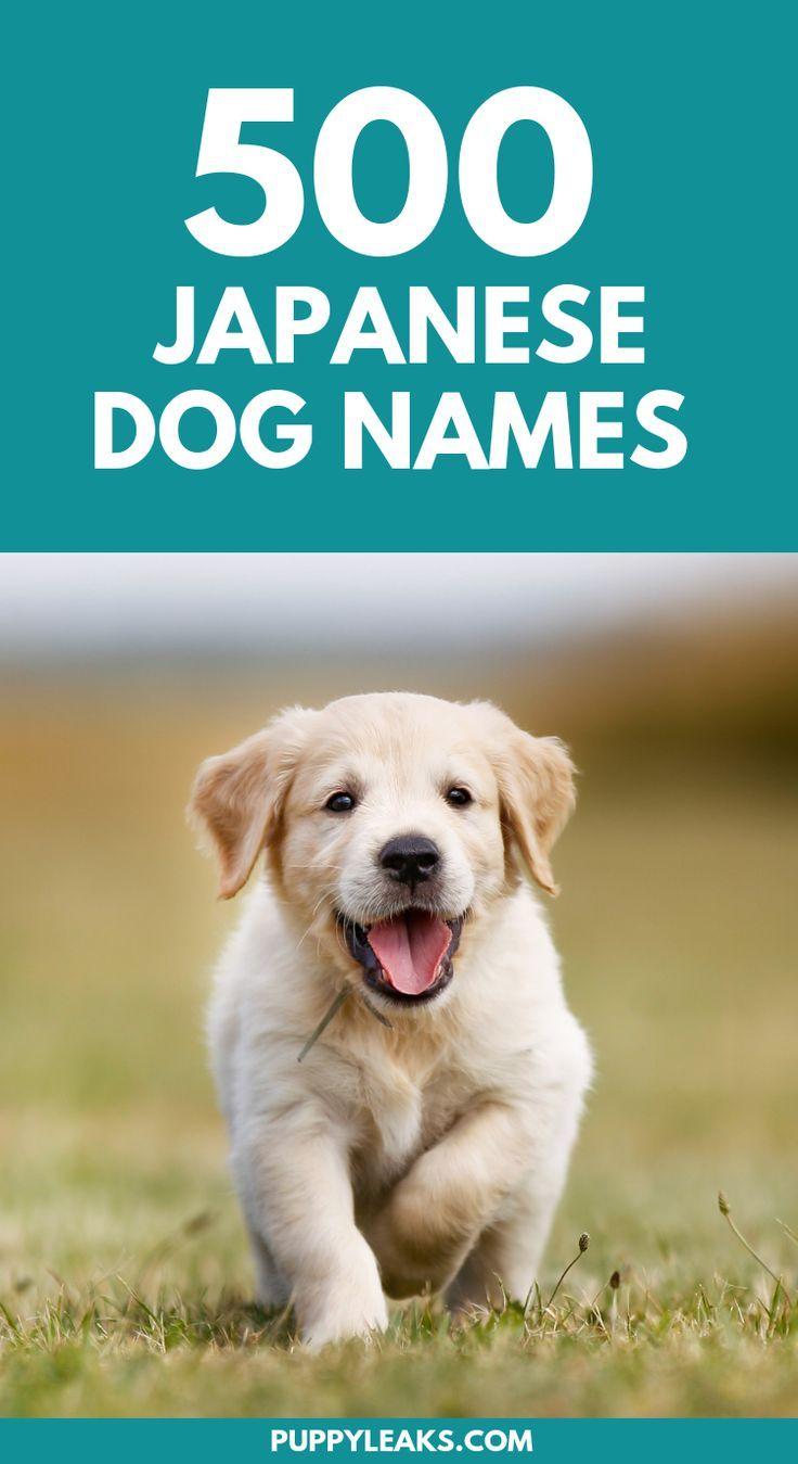 500 Japanese Dog Names Dog Names Japanese Dogs Dog Names Male