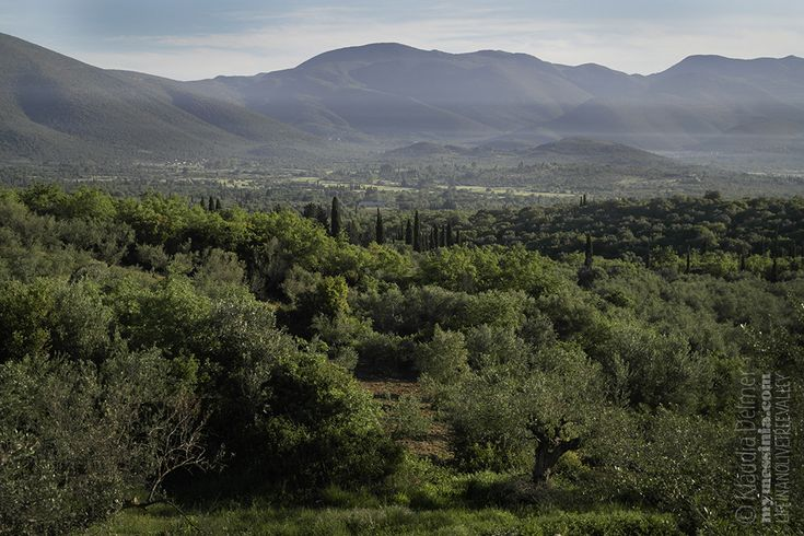 Messinian countryside-Uncombed Tuscany  Messinia is my uncombed beauty… | My Messinia