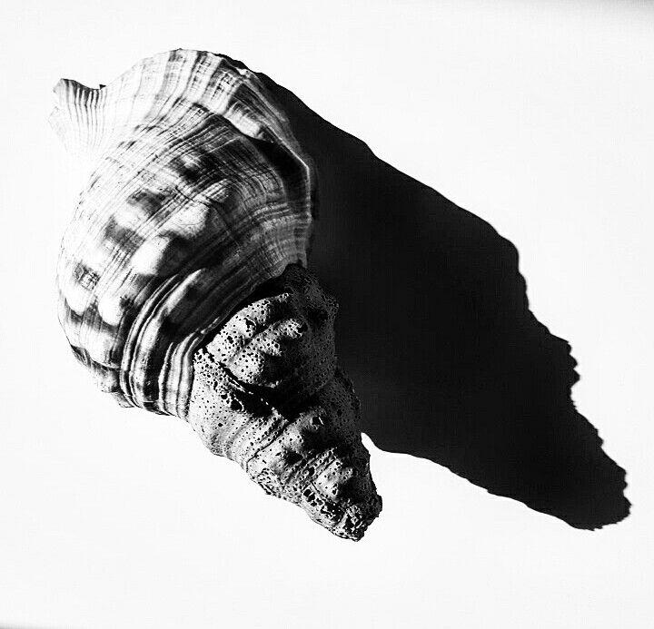 Coquillage fot.M.Górska