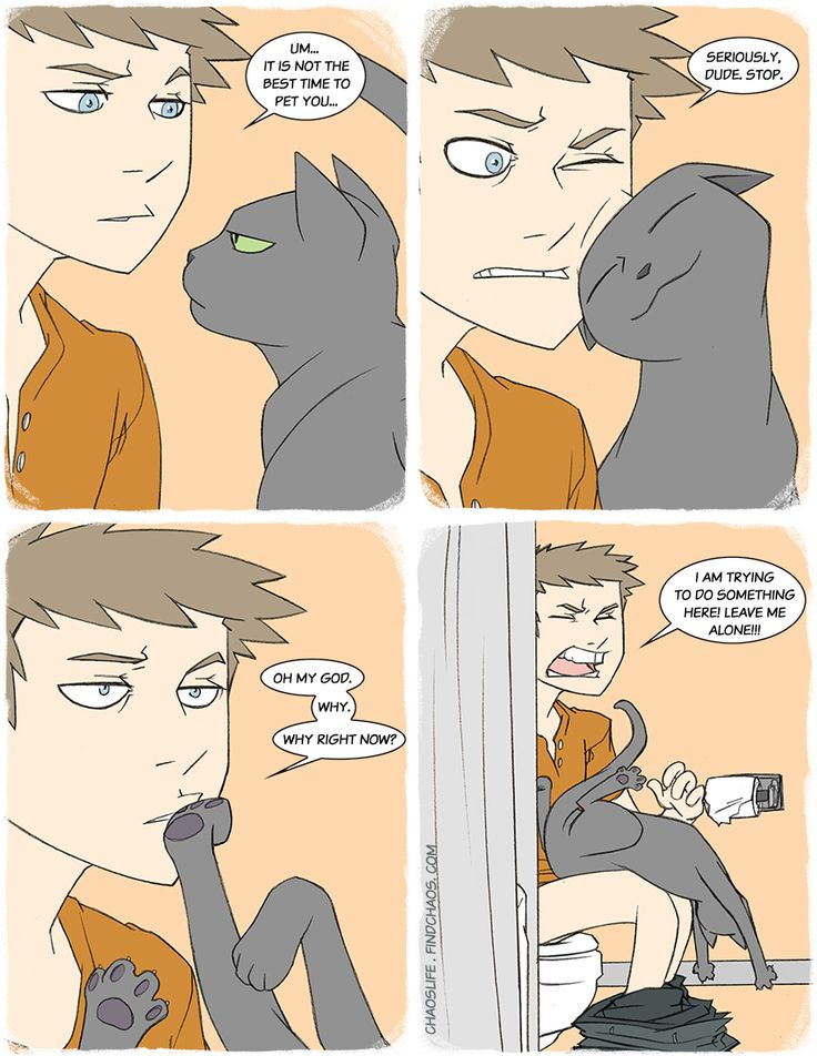 When cats most want to be affectionate, from Chaos Life. #chaoslife #comics