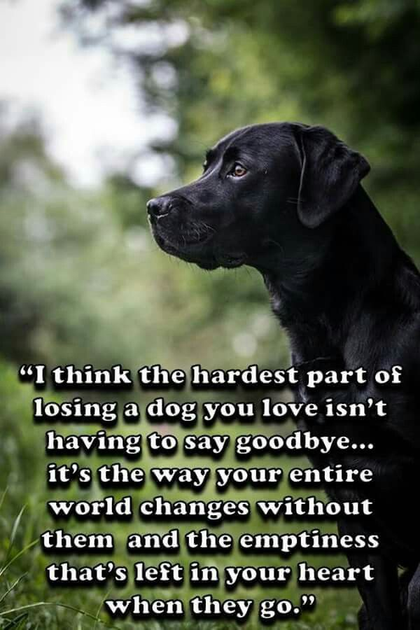 Hard to say goodbye... I'll never forget all the unconditional love my beautiful pets gave me. I am so lucky and grateful to have had all of you in my life. I love you...