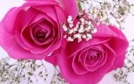 The color of #pinks is lovely in #nature #flowers #roses.