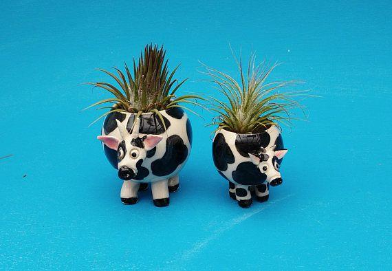 Small Cow Planter SucculentsAir Plants Cow Lover
