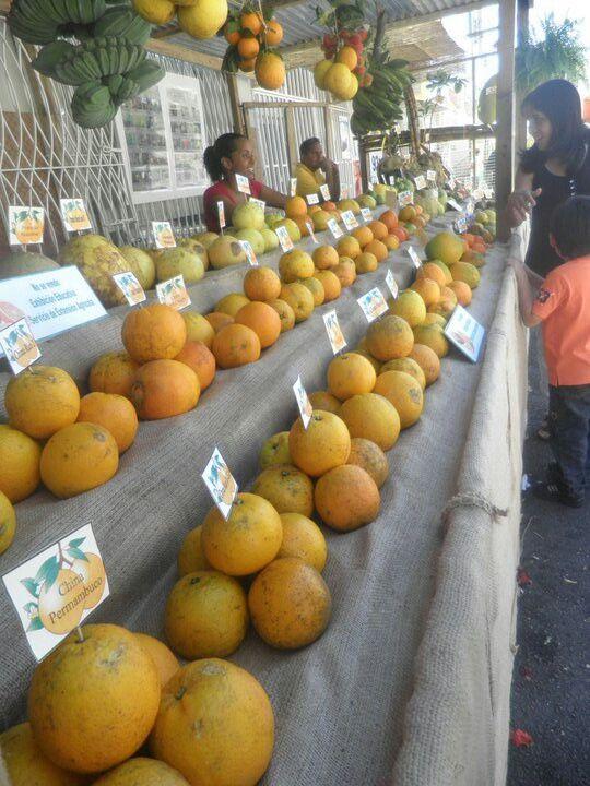 Festival de la China Dulce, Las Marias, Puerto Rico. Sweet Orange Festival, Las Marias, Puerto Rico. www.combatebeach.com