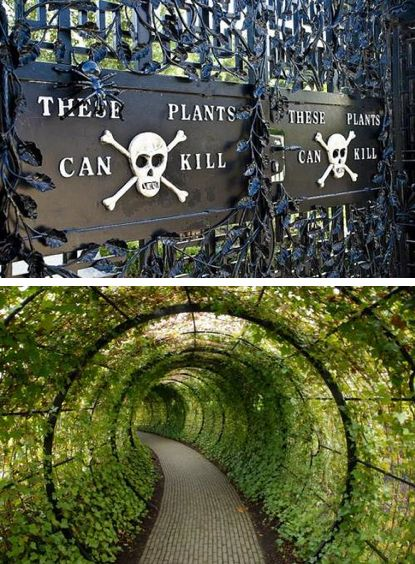 The Alnwick Poison Garden is pretty much what you'd think it is: a garden full of plants that can kill you (among many other things). Some of the plants are so dangerous that they have to be kept behind bars. #poisons #plants  Flavia de Luce would love this place.
