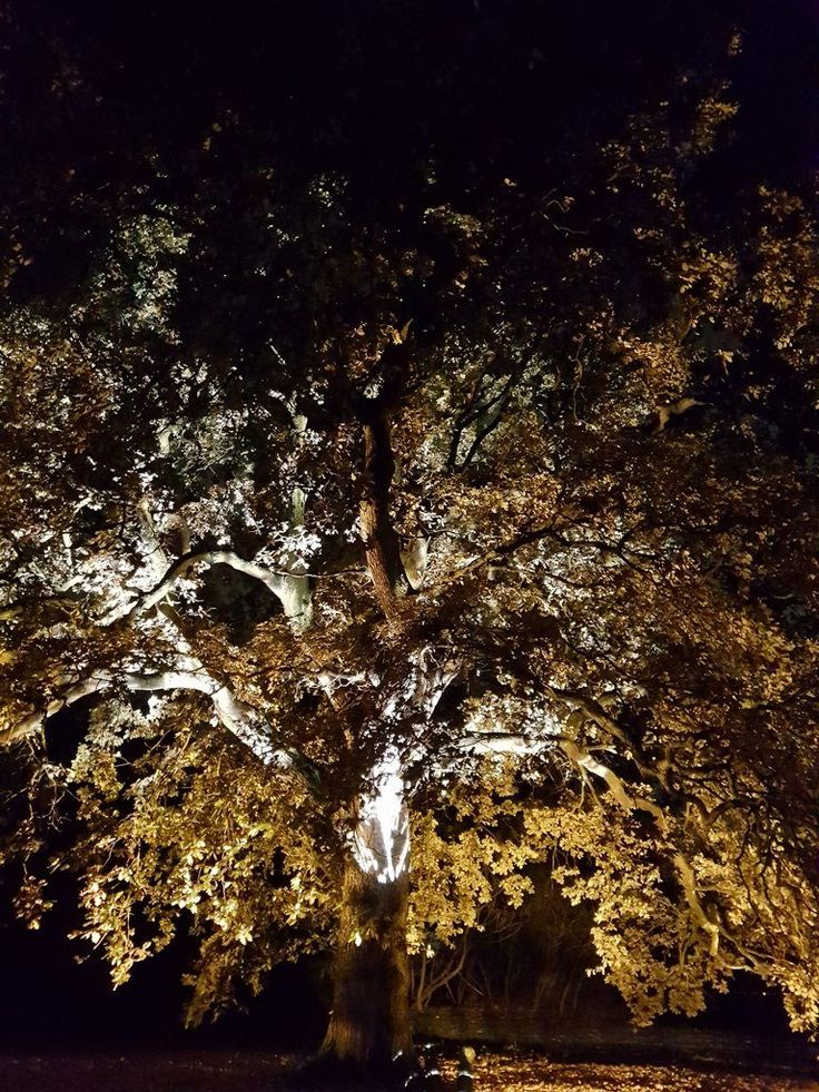 Admire the beauty of the trees at the Royal Botanic Gardens, at Kew, after dark, during the special Christmas at Kew 2016 light festival.