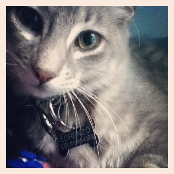 INSTAGRAM CAT GATOCat Gatos, Adorable Instagram, Instagram Cat