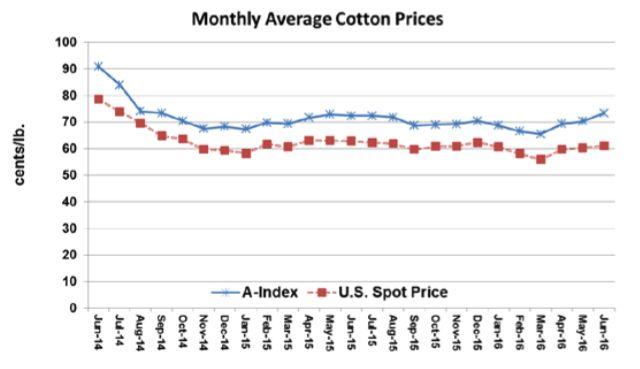 Cotone, ICAC: proiezioni di prezzo ed acreage - Materie Prime - Commoditiestrading