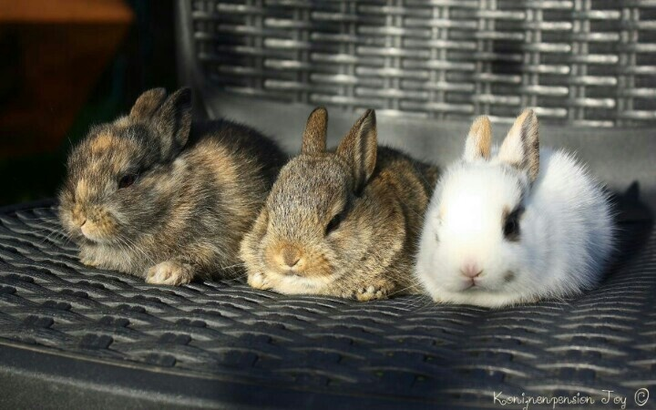 My baby bunnies