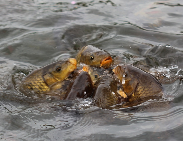 17 Best Images About Frogs Fish Turtles More On