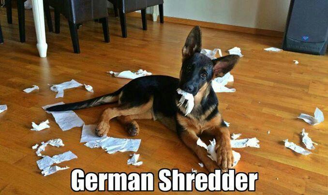 Niemiecki niszczarek