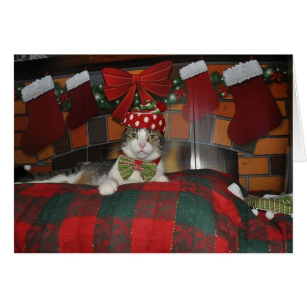 Black and white tabby cat dressed for Christmas Card #cards #christmascard #holiday