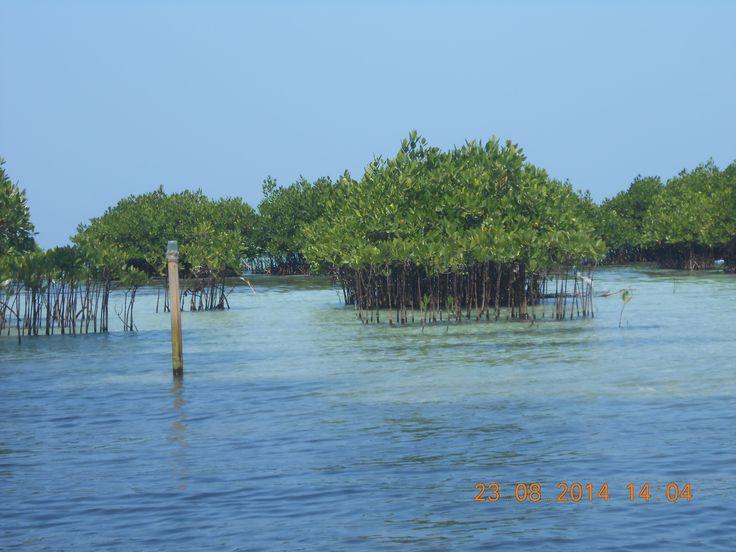 pulau pramuka jakarta