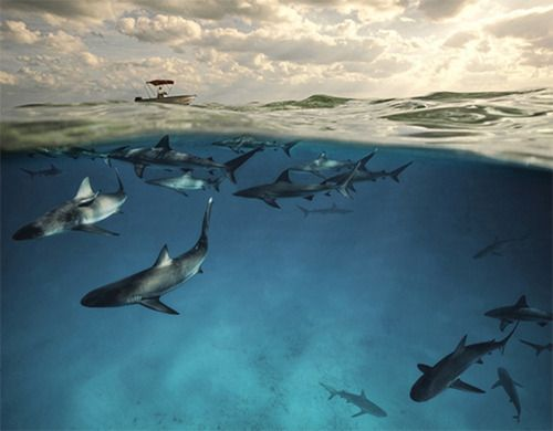 We need to work together to keep sharks plentiful in our oceans.
