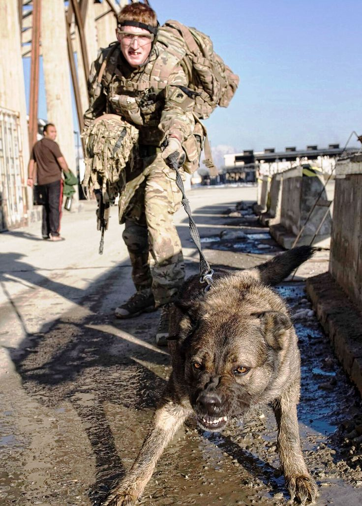 1000+ Ideas About Army Dogs On Pinterest