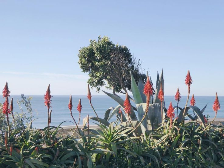 Beautiful plants in december in Ericeira, Portugal. In the background the Atlantic ocean. Only 10 minutes walking from Olá Onda.