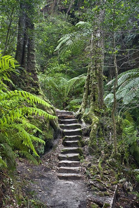 Grand Canyon walk, Blue Mountains, NSW, Australia -- all I can say is wow!
