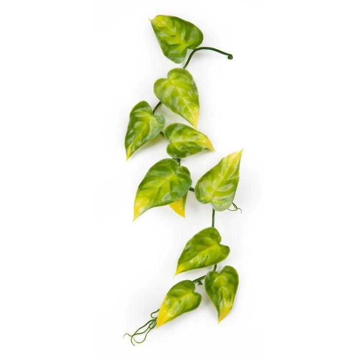 1000 ideas about pothos vine on pinterest golden pothos snake plant and house plants - House plants vines ...