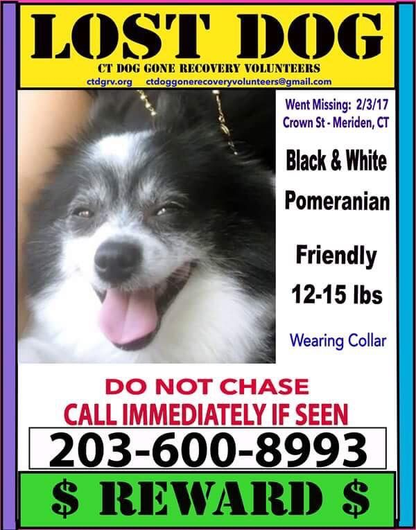 Missing Crown St Area In Meriden Ct Losing A Dog White