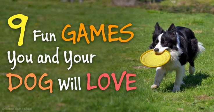 Rather than the same old, boring daily walk with your dog, why not incorporate a few of these fun games and activities into your routine? http://healthypets.mercola.com/sites/healthypets/archive/2015/02/09/fun-games-activities-dogs.aspx