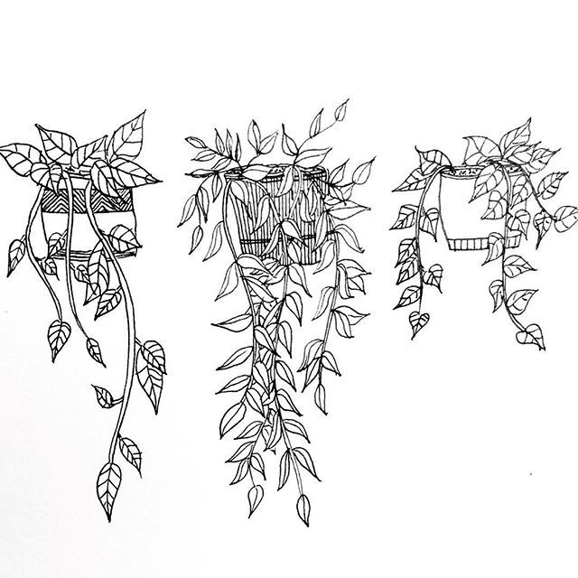 house plants drawing. dooooodle house plants drawing
