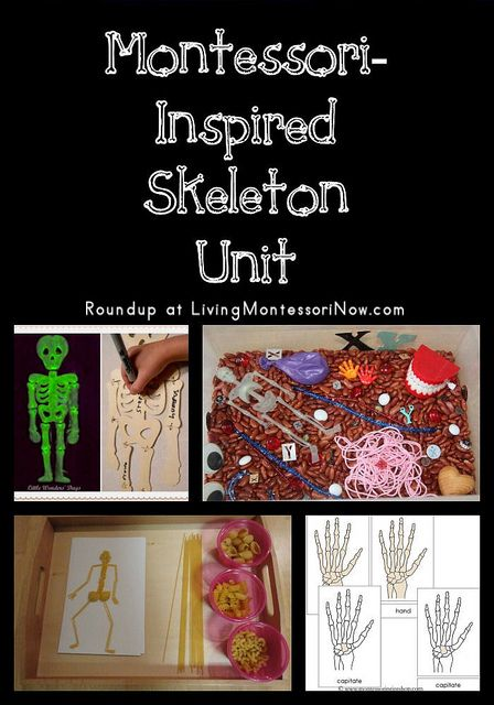 Blog post at LivingMontessoriNow.com : Human anatomy can be a fascinating subject, and many children especially enjoy studying bones. A variety of Montessori-inspired skeleton act[..]