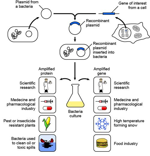 bacterial transformation using pglo involving x  bacterial transformation using pglo involving x and y genes introduction: genetic transformation is due to a direct cause in the change by genes, due to the cell.
