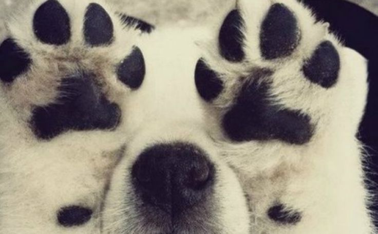 Dog's paws smell like Fritos corn chips?  Hahaha!