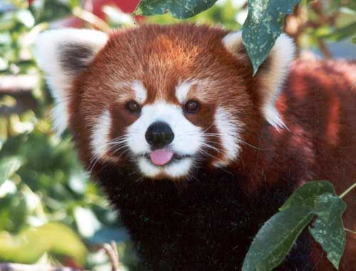 Here's a long list of the most beautiful red-colored animals in the world