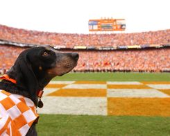 Smokey - Tennessee Vols!