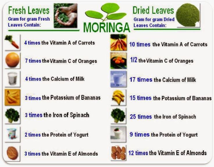 GirlsAffair: Health Benefits of Morninga Plant (moringa oleifera)