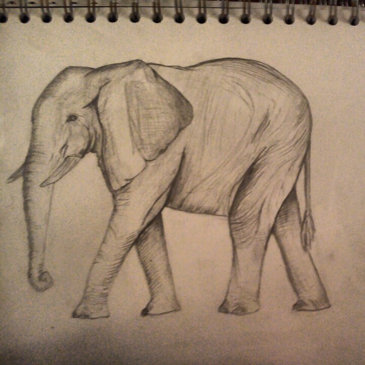 174 best Drawing - Elephants images on Pinterest