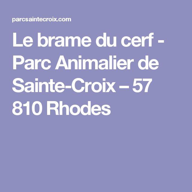 Le brame du cerf - Parc Animalier de Sainte-Croix – 57 810 Rhodes