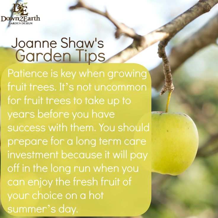 Patience is key when growing fruit trees! http://www.down2earth.ca/how-to-grow-a-fruit-tree/