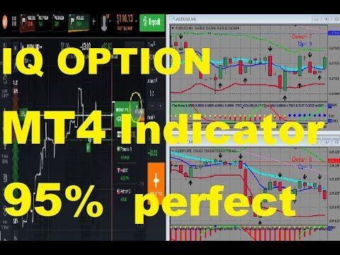Binary panel mt4 iq options