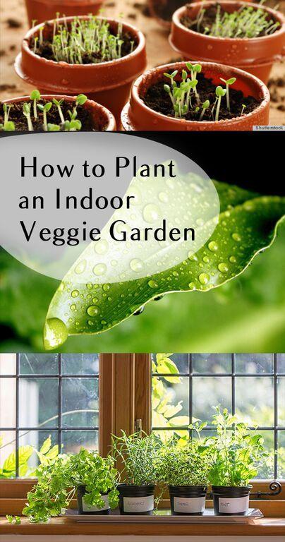 How to Plant an Indoor Veggie Garden