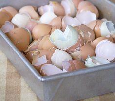 Daddy Cool!: 10 απίστευτες χρήσεις για τα τσόφλια των αβγών