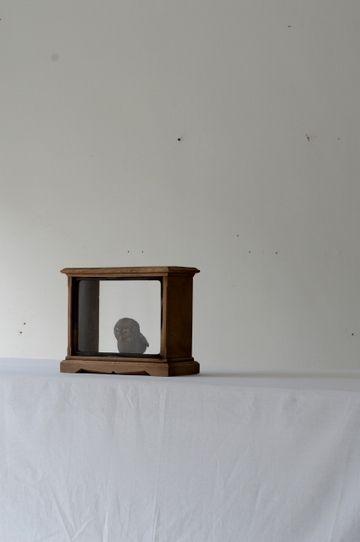 DOUGUYA   PRODUCTS   展示ケース