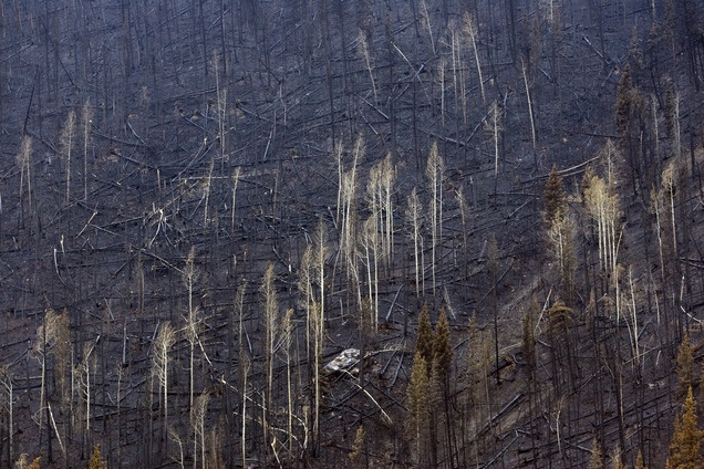 Devastation from the Seeley Fire in Carbon County. Now officials are worried about debris slides. (Kim Raff   The Salt Lake Tribune)