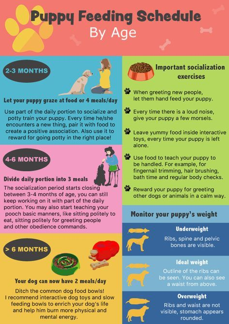 Puppy Feeding Schedule: Look At The Chart, Follow The Tips