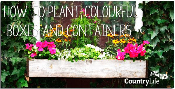 Vibrant boxes and pots make all the difference to patios, windowsills and doorsteps, adding colour and interest for the entire summer. They're easy to create, and summer bedding plants develop and flower quickly meaning they're ideal for all the family to grow. #gardening #tips #countrylife