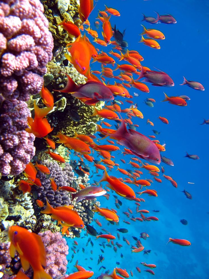 Bright undersea colors amazing pictures beautiful for What color are fish