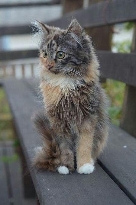 Z(*^^*)          #cat