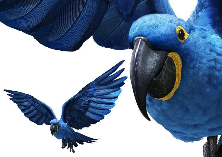 D'valia Studios- Blue Macaw