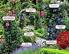 Вертикальные цветущие растения для сада — 6 соток