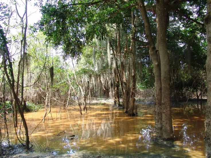 Laguna de Sonso, Buga Valle