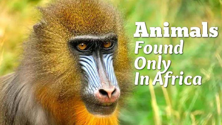 Top 10 Amazing Animals Found Only In Africa Animals