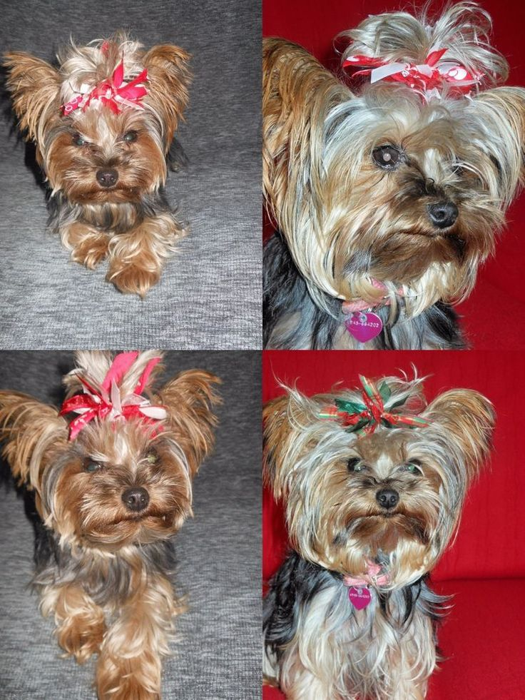 XMAS PUPPY PET DOG ΜΙΝΙ BOW BOBBLE PONYTAIL BAND UNIQUE RIBBON HAIR ACCESSORY #HandmadebyBONNIEBOBBLES
