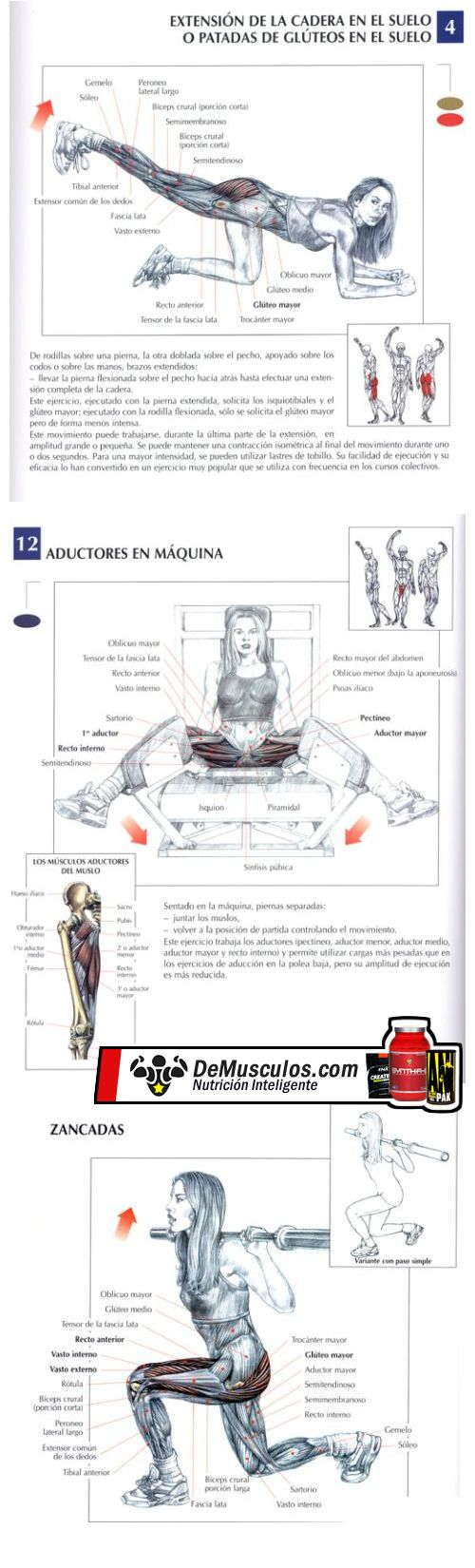 Varios ejercicios para glúteos. Más contenidos en www.EJERCICIOS.demusculos.com